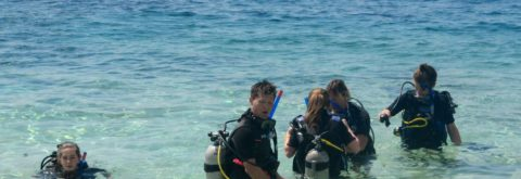 Cozumel Scuba Diving PADI Certification