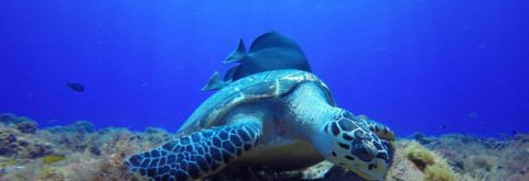 Cozumel Scuba Diving Daily Dive Trips