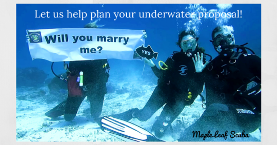 yucab reef- diveshop-underwater-marriage-proposal-maple-leaf-scuba