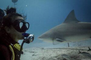 Diver watching a Bull Shark